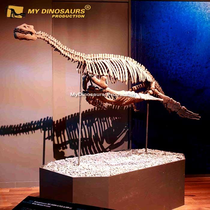 plesiosaur skeleton
