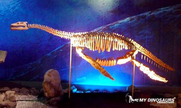 mydinosaurs dinosaur skeleton