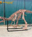 6.3m T rex skeleton 2