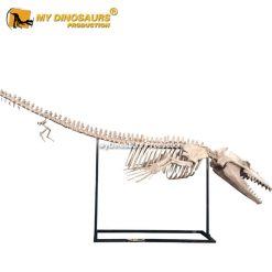 Basilosaurus skeleton 1