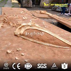 life size sea animal whale skeleton