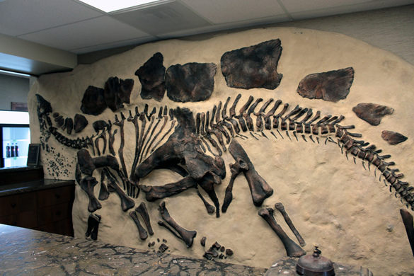stegosaurus fossil replica wall