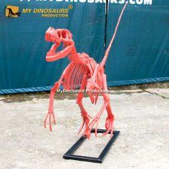 Red raptor skeleton 2
