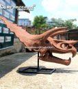 Triceratops skull 2