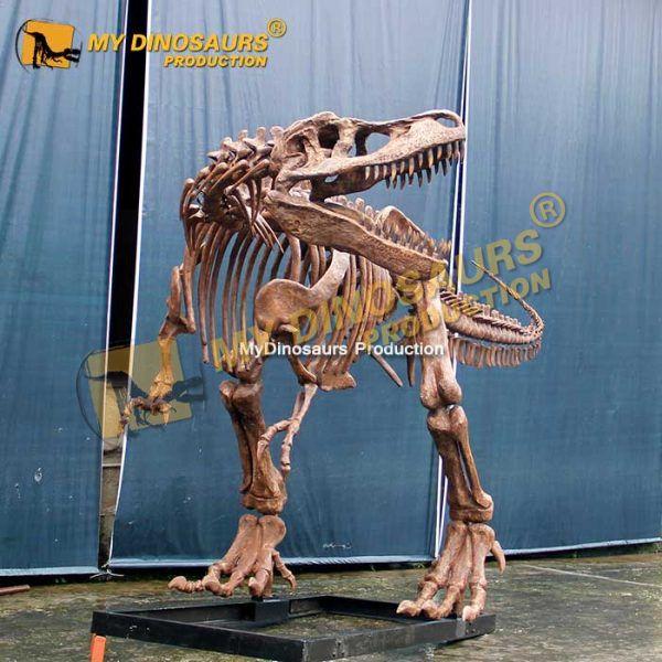 T rex skeleton 6