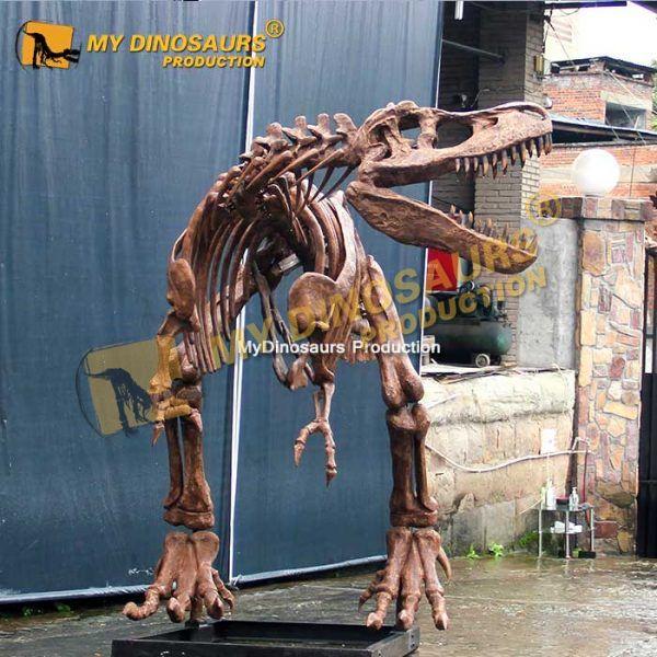 T rex skeleton 6.3m 1