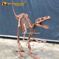 life size raptor skeleton 1