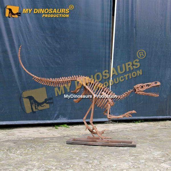 life size raptor skeleton