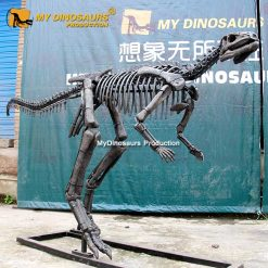 dryosaurus skeleton