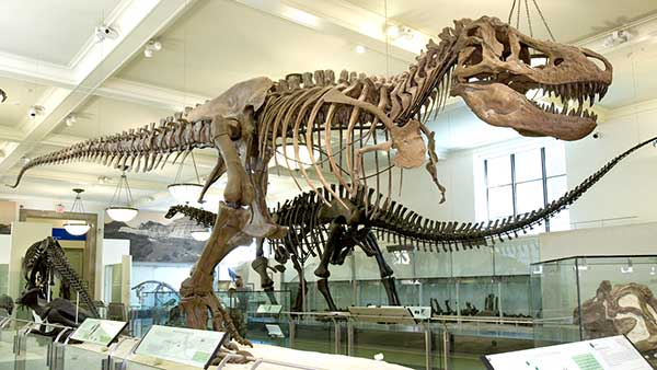 the first t rex skeleton