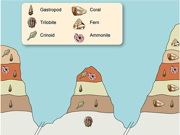How Do We Know the Age of Dinosaur Fossils 2