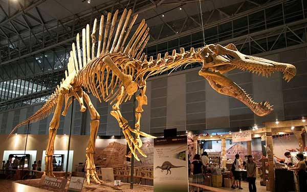 How Do We Know the Age of Dinosaur Fossils