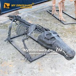crocodile skeleton 2