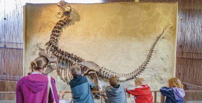 dinosaur excavation site