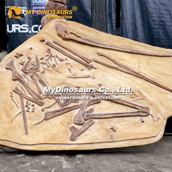 pterosaur cast