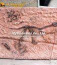 velociraptor fossil cast