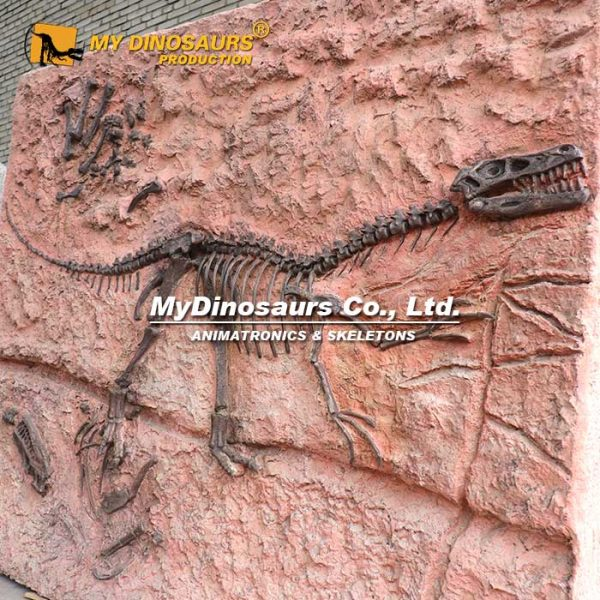 velociraptor fossil cast 2