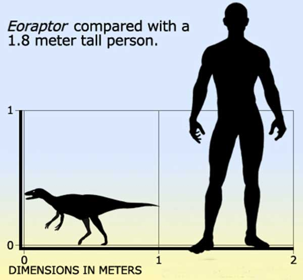 Triassic Eoraptor