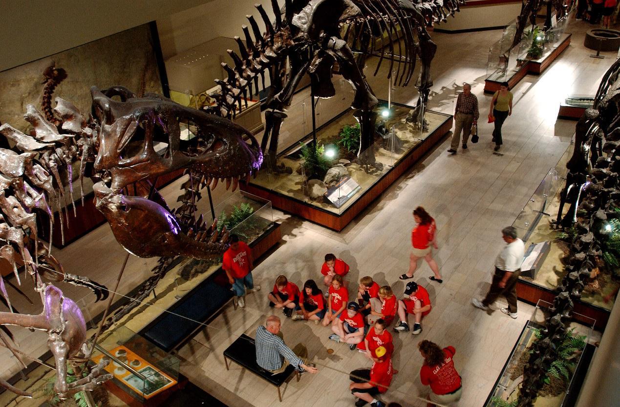dinosaur fossil teaching