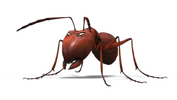 Valley Of The Lost Ants 3